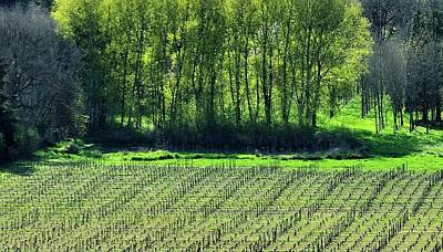 Photograph - Anne Amie Vineyard Lines 23093 14x8 by Jerry Sodorff