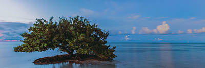 Photograph - Anne's Beach Mangrove by Stefan Mazzola