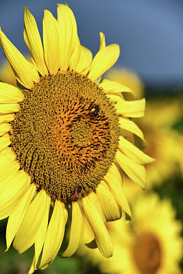 Photograph - Another Sunny Day by Mike Martin