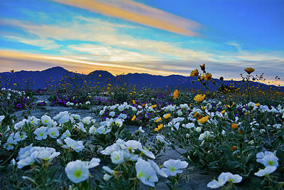 Photograph - Anza Borrego Wildflower Sunset by Kyle Hanson