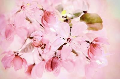 Photograph - Apple Blossom by Jessica Jenney