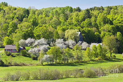 Photograph - Apple Blossom Scenic by Alan L Graham