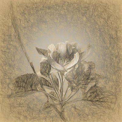 Apple Blossom Sketch Original by Andrey Suchkov