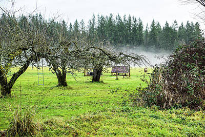 Photograph - Apple Orchard Fog In Skagit County by Tom Cochran