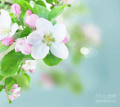 Photograph - Apple Tree Blossom by Anastasy Yarmolovich