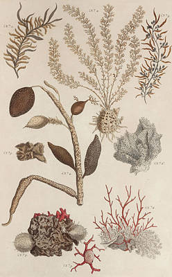 Animals Drawings - Aquatic Animals - Seafood - Algae - Seaplants - Coral by Art Makes Happy