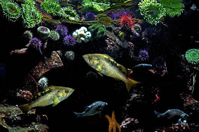 Photograph - Aquatic Life by Peggy Collins