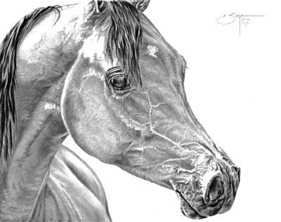 Brindle Drawing - Arabian Mare by Elizabeth Sage