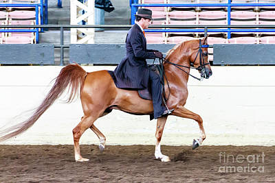 Photograph - Arabian Show Horse 4 by Ben Graham