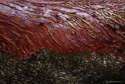 Digital Art - Arbutus Tree Bark by Tom Janca
