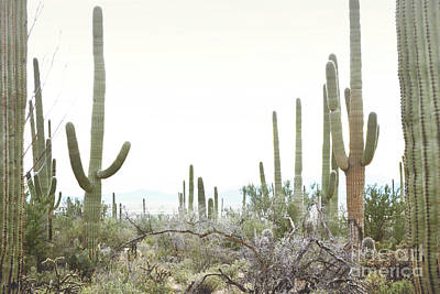 Photograph - Arizona Cactus Field by Andrea Hazel Ihlefeld
