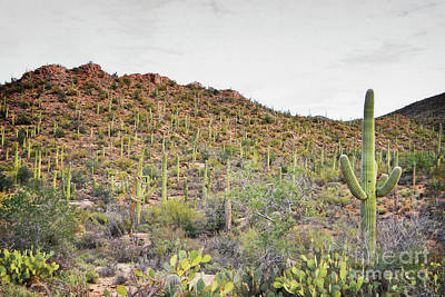 Photograph - Arizona Desert Mountain Cactus Landscape by Andrea Hazel Ihlefeld