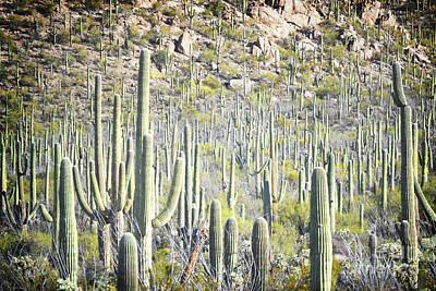 Photograph - Arizona Saguaro Cactus Field Landscape by Andrea Hazel Ihlefeld