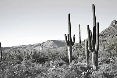 Photograph - Arizona Saguaro Cactus Mountain Landscape by Andrea Hazel Ihlefeld