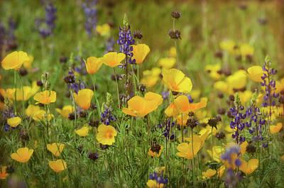 Photograph - Arizona Wildflowers  by Saija Lehtonen