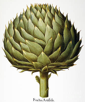 Photograph - Artichoke, 1613 by Granger