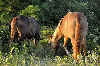 Photograph - Asateague Horses 6 by Andrew Dinh