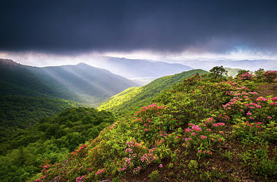 Mountain Laurel Photograph -  Asheville Nc Blue Ridge Parkway Spring Flowers North Carolina by Dave Allen
