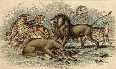1. Asiatic Lion. 2. Lioness. 3.bengal Art Print