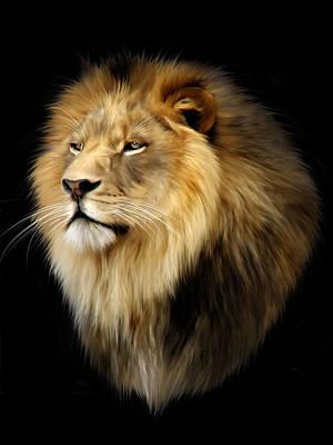 Carnivore Digital Art - Aslan by Julie L Hoddinott