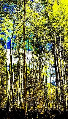 Photograph - Aspen Forest Abstract by Jennifer Lake