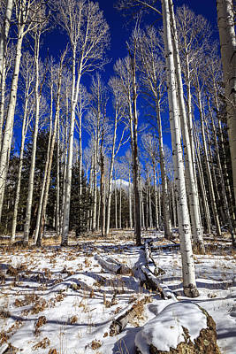 Photograph - Aspen Forest by Alexey Stiop