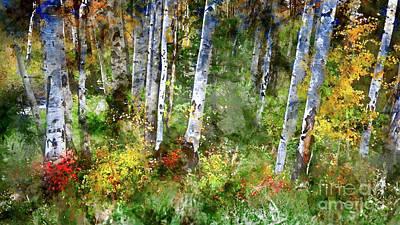 Photograph - Aspen Forest by Doug Sturgess