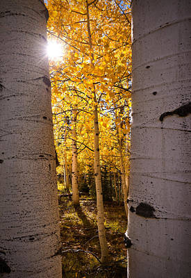 Photograph - Aspen Gold by Bjorn Burton