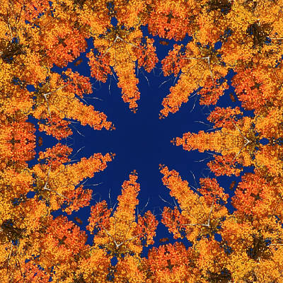 Art Print featuring the photograph Aspen Kaleidoscope  by Bill Barber