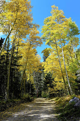 Photograph - Aspen Road by Jim Arnold