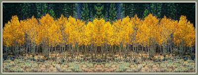 Photograph - Aspen Stand by Sherri Meyer