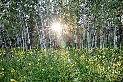 Photograph - Aspen Sun by Idaho Scenic Images Linda Lantzy