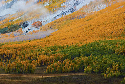 Photograph - Aspen Trees And Snow by John De Bord