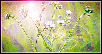 Spritual Light Digital Art - Asters At Sunset by A Gurmankin