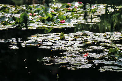 Photograph - At Claude Monet's Water Garden 7 by Dubi Roman