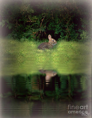 Photograph - Dusk Bunny by Barbara S Nickerson