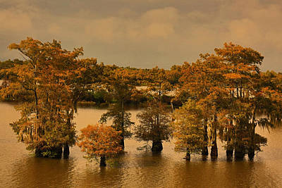 Photograph - Atchafalaya Basin by Ronald Olivier