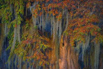 Photograph - Atchafalaya Majesty by Chris Moore