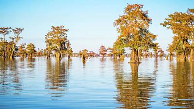 Photograph - Atchafalaya Swamp 1 Louisiana by Lawrence S Richardson Jr