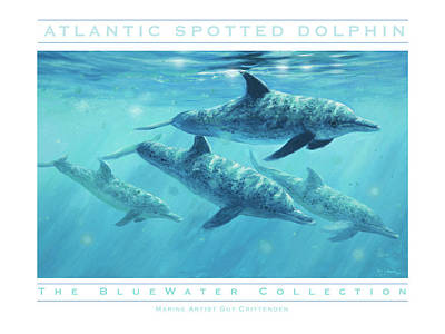 Wall Art - Painting - Atlantic Spotted Dolphin by Guy Crittenden