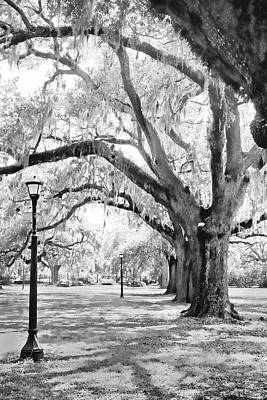 Photograph - Audubon Park - New Orleans by Dana Sohr