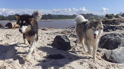 Huskie Wall Art - Photograph - Australia - Two Huskies On The Beach by Jeffrey Shaw