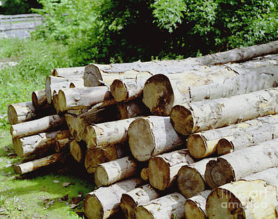 Photograph - Austrian Log Stack by John Bowers