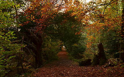 Photograph - Autum In Killarney by Barbara Walsh