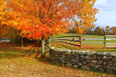 Photograph - Autumn Afternoon by Suzanne DeGeorge