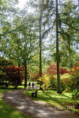 Photograph - Autumn At Westonbirt Arboretum by Colin Rayner