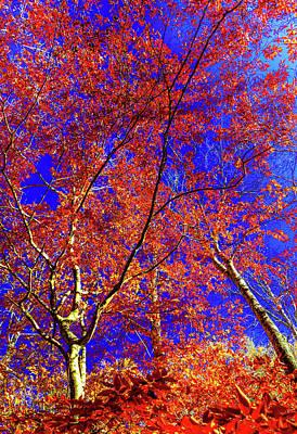 Photograph - Autumn Blaze by Karen Wiles