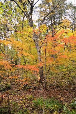 Photograph - Autumn by Bonfire Photography