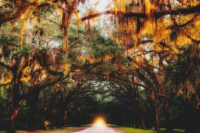 Photograph - Autumn Canopy In Savannah by Unsplash