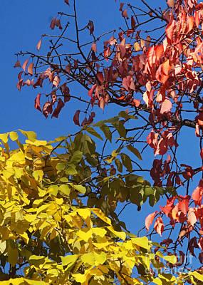 Photograph - Autumn Colors 13 by Rudi Prott